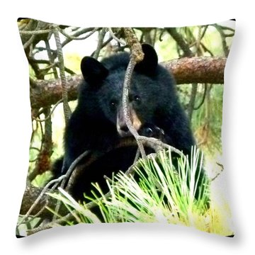 Young Black Bear Throw Pillow by Will Borden