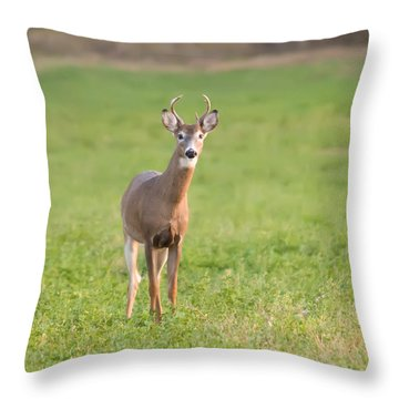 Throw Pillow featuring the photograph Young Buck by Art Whitton