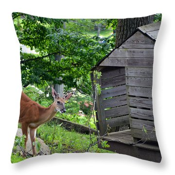 Throw Pillow featuring the photograph Young Buck At Treehouse Hopatcong by Maureen E Ritter