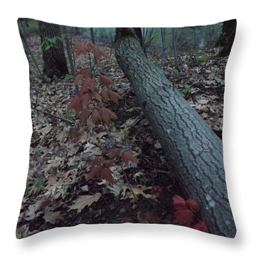 Throw Pillow featuring the photograph Young Maple At The Swamp by Gerald Strine