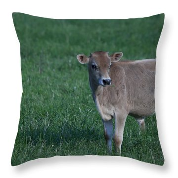 Throw Pillow featuring the photograph Young Moo by John Crothers