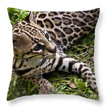 Young Ocelot Throw Pillow