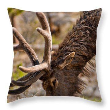 Throw Pillow featuring the photograph Young One by Colleen Coccia