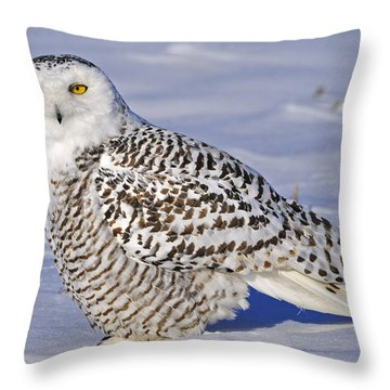 Young Snowy Owl Throw Pillow