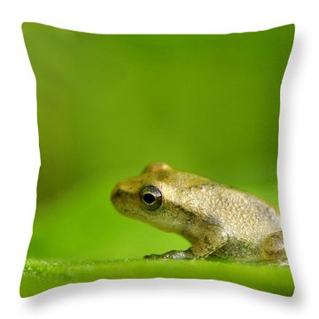 Young Spring Peeper Pseudacris Crucifer Throw Pillow by Steeve Marcoux