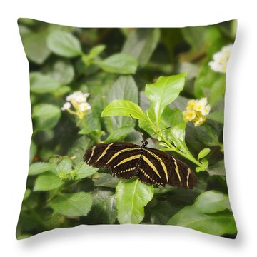 Throw Pillow featuring the photograph Zebra Butterfly by Marianne Campolongo