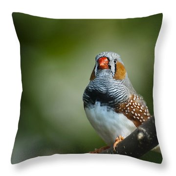 Zebra Finch Taeniopygia Guttata II Throw Pillow