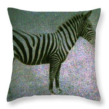 Zebra Throw Pillow by Kelly Hazel