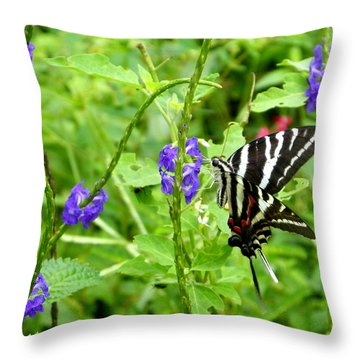 Zebra Swallowtail On Blue Porterweed Throw Pillow by Judy Wanamaker