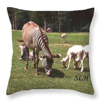 Zebra's Grazing Throw Pillow