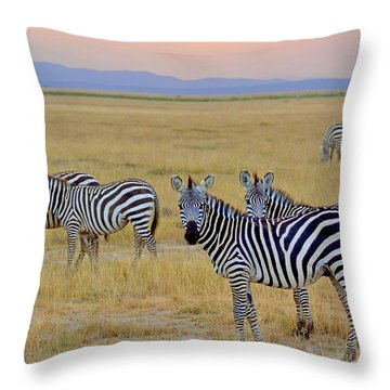 Zebras In The Morning Throw Pillow by Pravine Chester