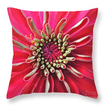 Throw Pillow featuring the photograph Zinnia Macro by Eve Spring