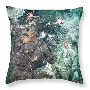 Zooarium Chimney Throw Pillow
