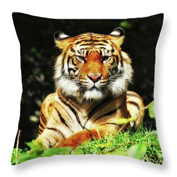 Throw Pillow featuring the photograph  A Beauty Among The Beasts by Elaine Manley