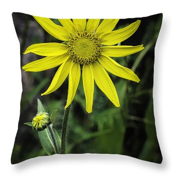 Arnica Montana Throw Pillow