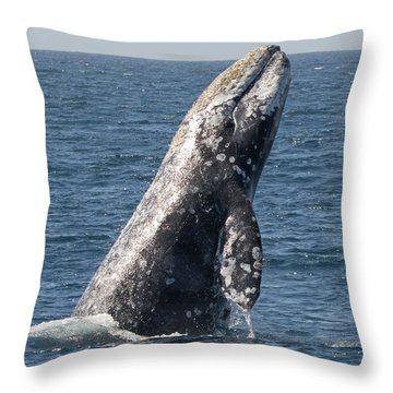Breaching Gray Whale In Dana Point Throw Pillow