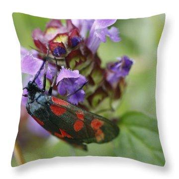 Burnet Moth Throw Pillow by Martina Fagan