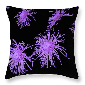 Chrysanthemums In Purple Throw Pillow