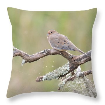 Early Mourning Dove Throw Pillow by Kathy Gibbons