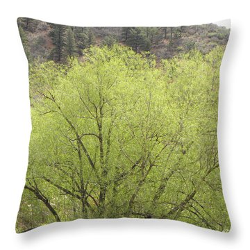 Tree Ute Pass Hwy 24 Cos Co Throw Pillow