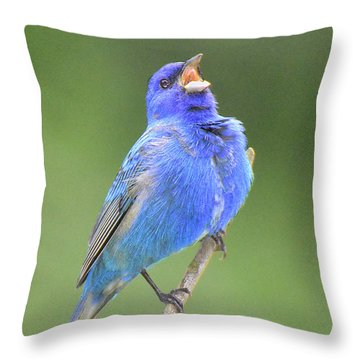 Hear The Indigo Bunting Sing Throw Pillow by Alan Lenk