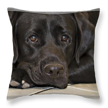 Labrador Retriever A1a Throw Pillow