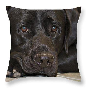 Labrador Retriever A1b Throw Pillow