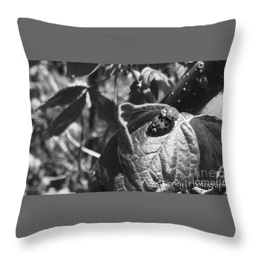 Throw Pillow featuring the photograph  Love-bugs - No. 2016 by Joe Finney
