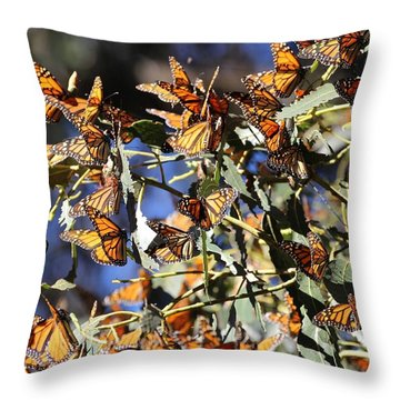 Monarch Cluster Throw Pillow