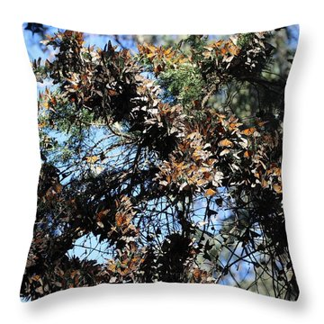 Monarch Large Cluster Throw Pillow