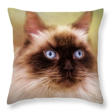 Throw Pillow featuring the digital art  Ragdoll Cat by Trudi Simmonds