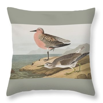 Red-breasted Sandpiper  Throw Pillow by John James Audubon