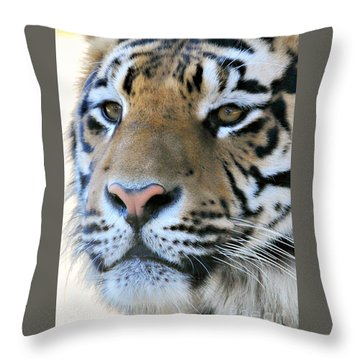 Tiger Portrait  Throw Pillow by Mindy Bench