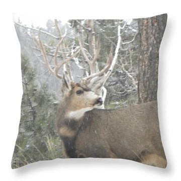 Buck Front Yard Divide Co Throw Pillow
