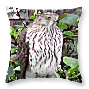 03192015 Sparrow Hawk Throw Pillow