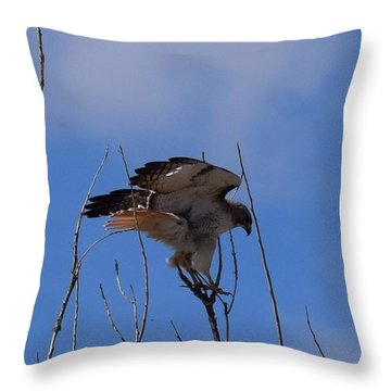 Throw Pillow featuring the photograph Red Tail Hawk Female Tower Rd Denver by Margarethe Binkley