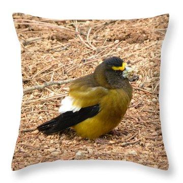 Evening Grossbeak Divide Co Throw Pillow