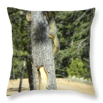 Squirrel Home Divide Co Throw Pillow