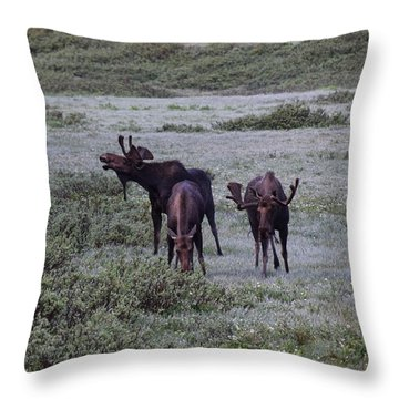 Moose Cameron Pass Co Throw Pillow
