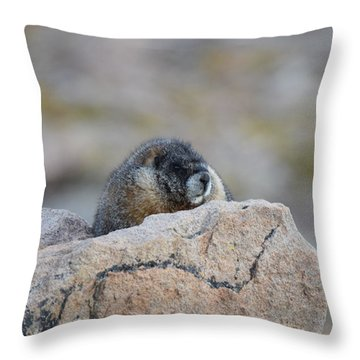 Throw Pillow featuring the photograph Marmot Mnt Evans Evergreen Co by Margarethe Binkley