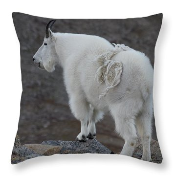 Throw Pillow featuring the photograph Mountain Goat Mnt Evans Co  by Margarethe Binkley