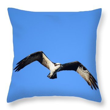 Throw Pillow featuring the photograph Osprey Burgess Res Divide Co by Margarethe Binkley