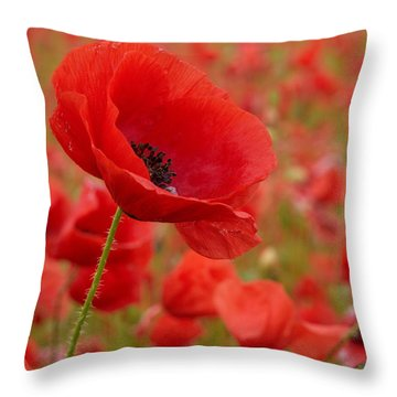 Red Poppies 3 Throw Pillow by Jouko Lehto