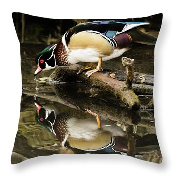 A Sip For You And Me Wildlife Art By Kaylyn Franks Throw Pillow