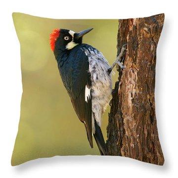 Acorn Woodpecker Throw Pillow by Doug Herr
