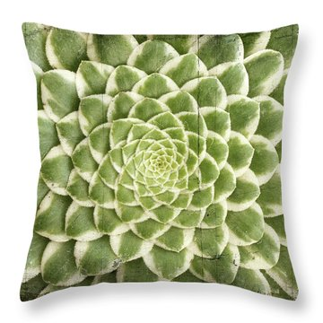Aeonium Succulent  Throw Pillow by Catherine Lau