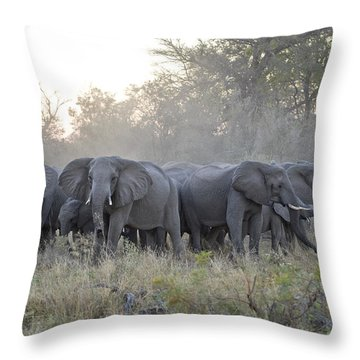 African Elephant Loxodonta Africana Throw Pillow by Suzi Eszterhas