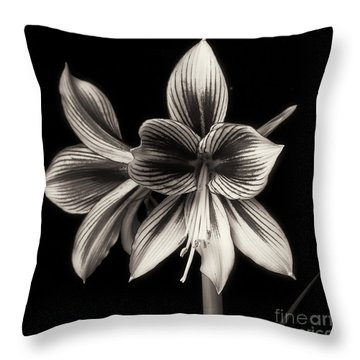 Amaryllis 'papilio Improved' Throw Pillow