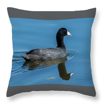 American Coot Swiming Throw Pillow by Edward Peterson
