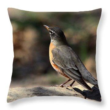 American Robin On Rock Throw Pillow